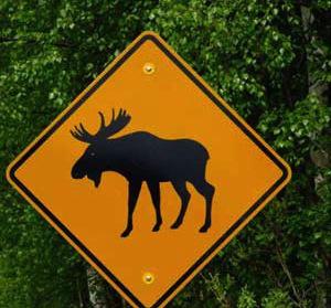 moose-sign-dscf1967.jpg